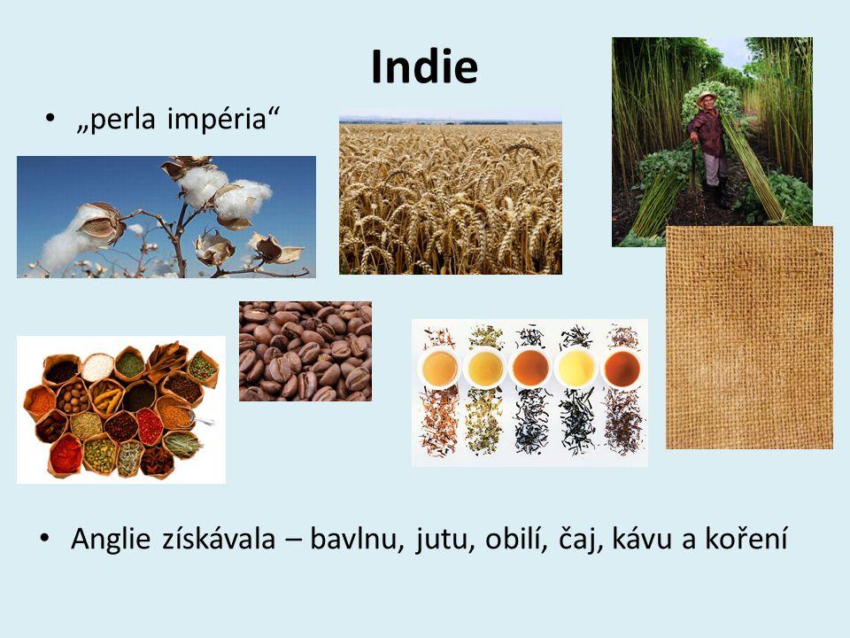 """Indie """"perla impéria"""" Anglie získávala – bavlnu, jutu, obilí, čaj, kávu a koření"""