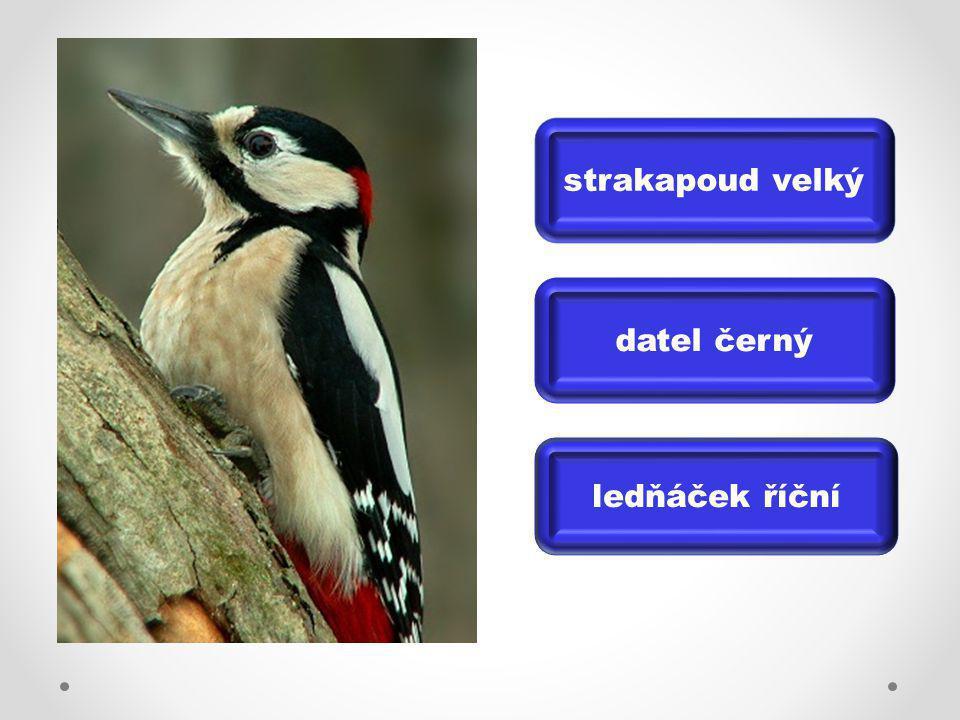 vrabec domácí drozd zpěvný koroptev polní