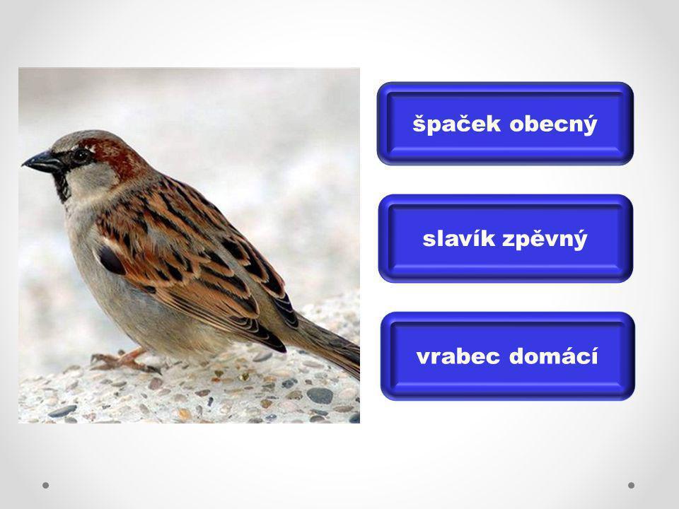 slavík zpěvný špaček obecný vrabec domácí