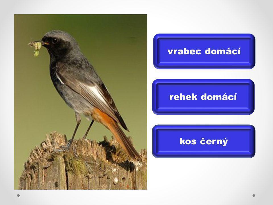 Věda o ptácích = ORNITOLOGIE ŘEŠENÍ