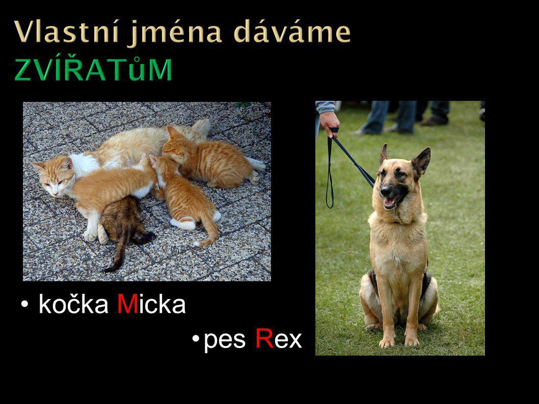kočka Micka pes Rex