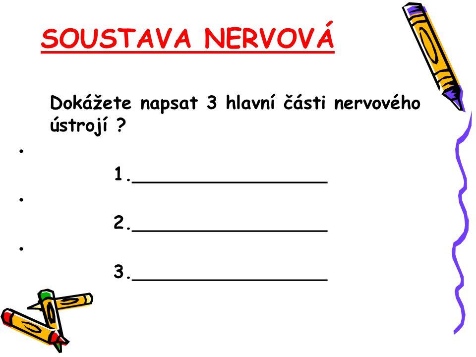 SOUSTAVA NERVOVÁ Dokážete napsat 3 hlavní části nervového ústrojí ? 1._________________ 2._________________ 3._________________