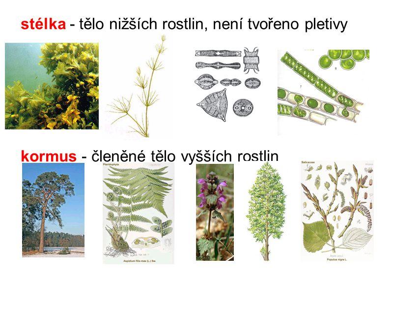 stélka - tělo nižších rostlin, není tvořeno pletivy kormus - členěné tělo vyšších rostlin
