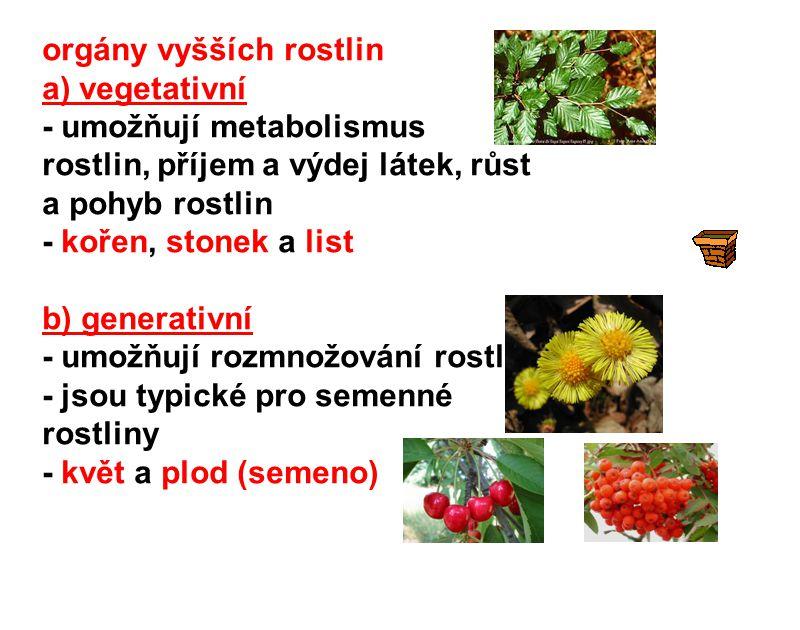 orgány vyšších rostlin a) vegetativní - umožňují metabolismus rostlin, příjem a výdej látek, růst a pohyb rostlin - kořen, stonek a list b) generativn