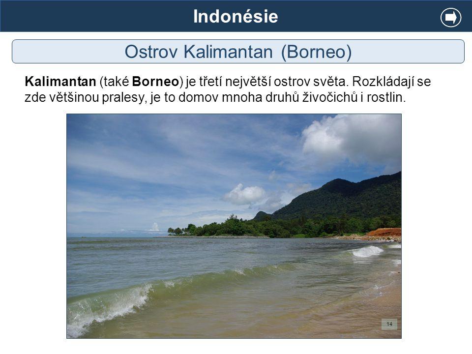 Indonésie Ostrov Kalimantan (Borneo) Kalimantan (také Borneo) je třetí největší ostrov světa. Rozkládají se zde většinou pralesy, je to domov mnoha dr