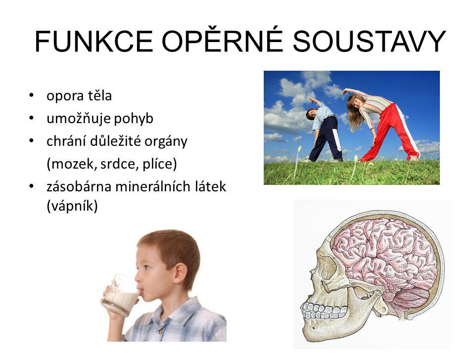 FUNKCE OPĚRNÉ SOUSTAVY opora těla umožňuje pohyb chrání důležité orgány (mozek, srdce, plíce) zásobárna minerálních látek (vápník)