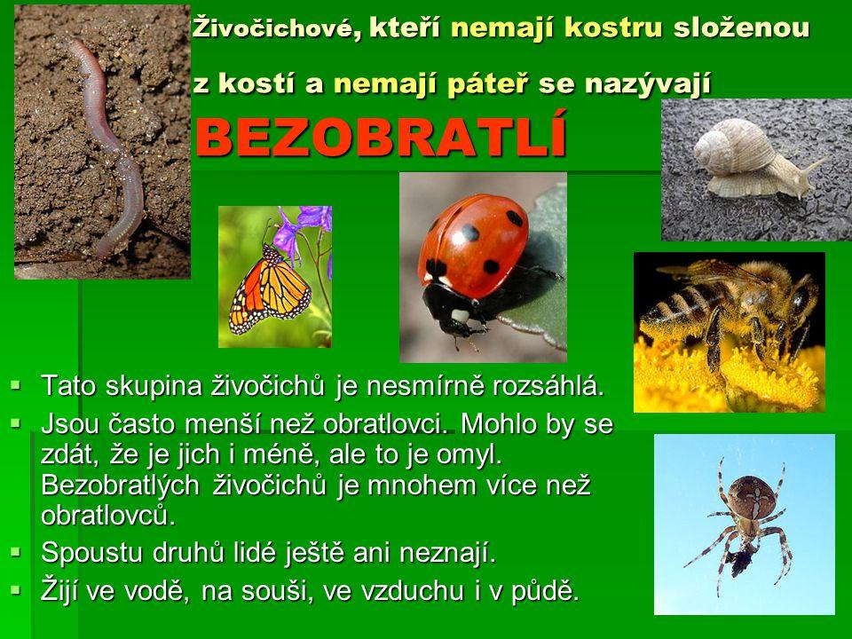 HMYZ – je velmi rozsáhlá skupina bezobratlých, zatím budeme poznávat tři skupiny Brouci Blanokřídlí Motýli