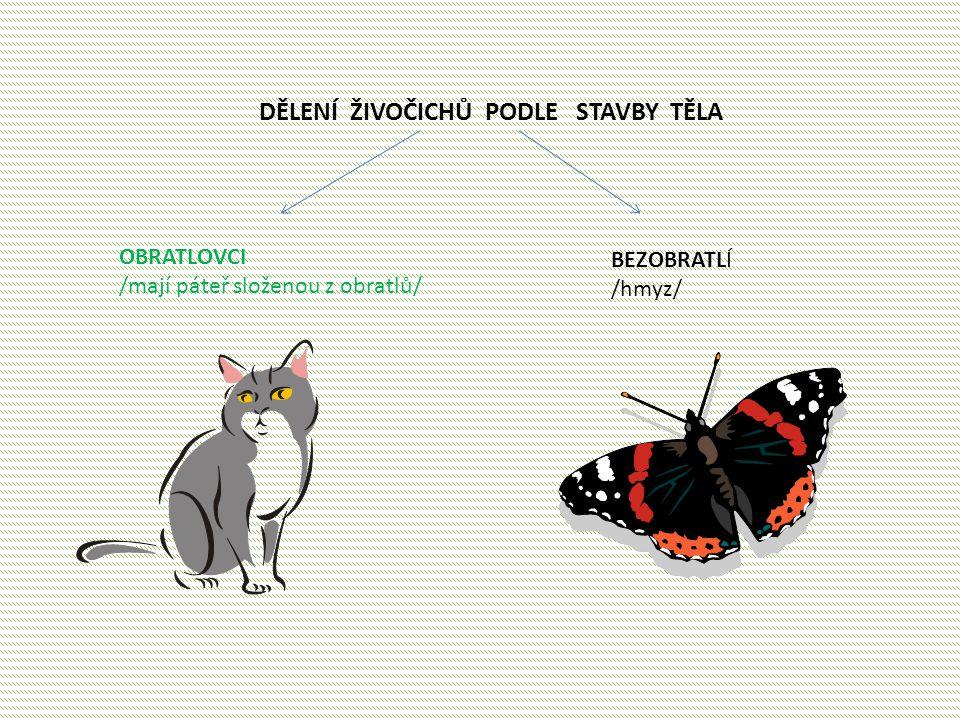 DĚLENÍ ŽIVOČICHŮ PODLE STAVBY TĚLA OBRATLOVCI /mají páteř složenou z obratlů/ BEZOBRATLÍ /hmyz/