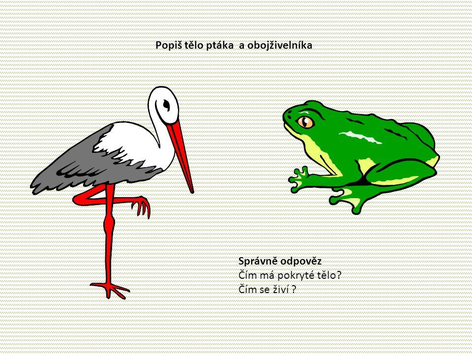 Popiš tělo ptáka a obojživelníka Správně odpověz Čím má pokryté tělo? Čím se živí ?