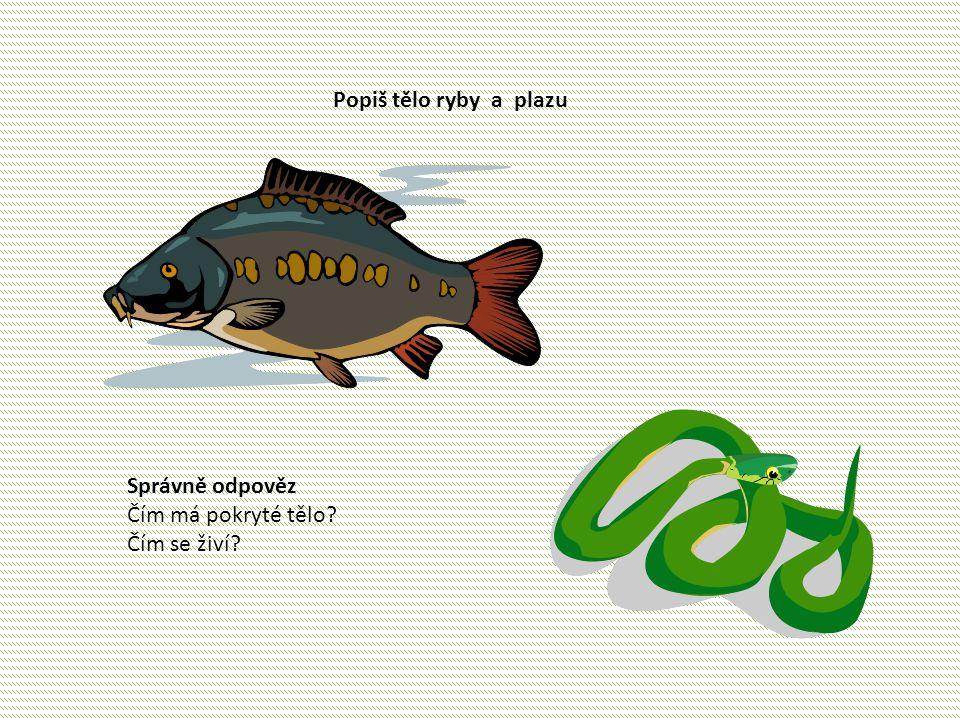 Popiš tělo ryby a plazu Správně odpověz Čím má pokryté tělo? Čím se živí?