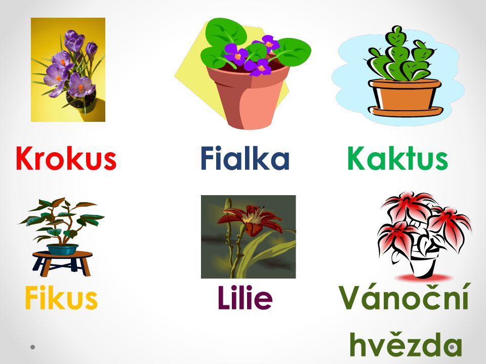 Krokus Fialka Kaktus Fikus Lilie Vánoční hvězda