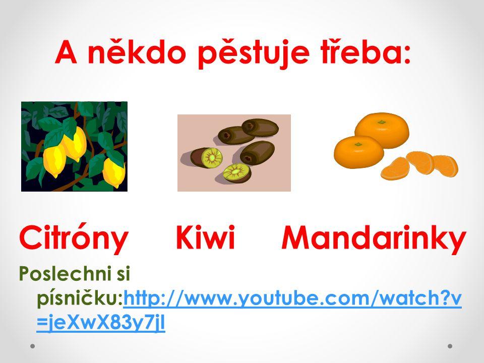 A někdo pěstuje třeba: Citróny Kiwi Mandarinky Poslechni si písničku:http://www.youtube.com/watch v =jeXwX83y7jIhttp://www.youtube.com/watch v =jeXwX83y7jI