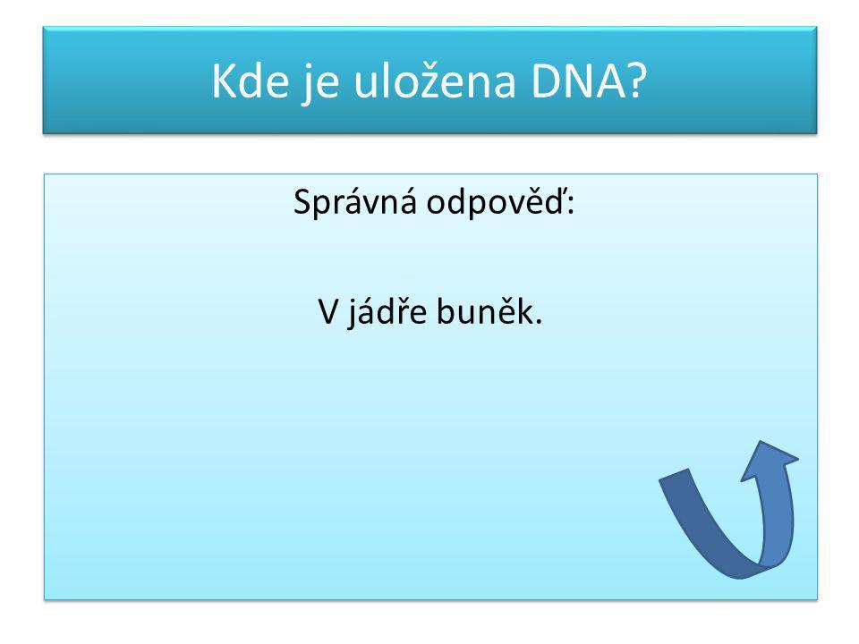 Kde je uložena DNA? Správná odpověď: V jádře buněk. Správná odpověď: V jádře buněk.
