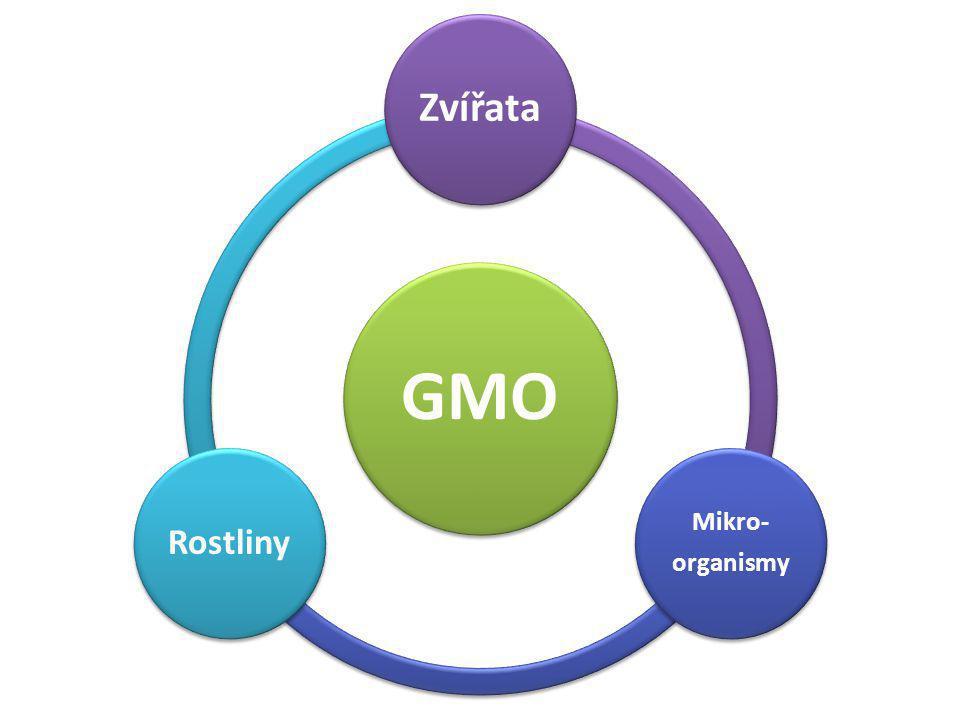 J OHANN G REGOR M ENDEL Považován za zakladatele genetiky V 19.