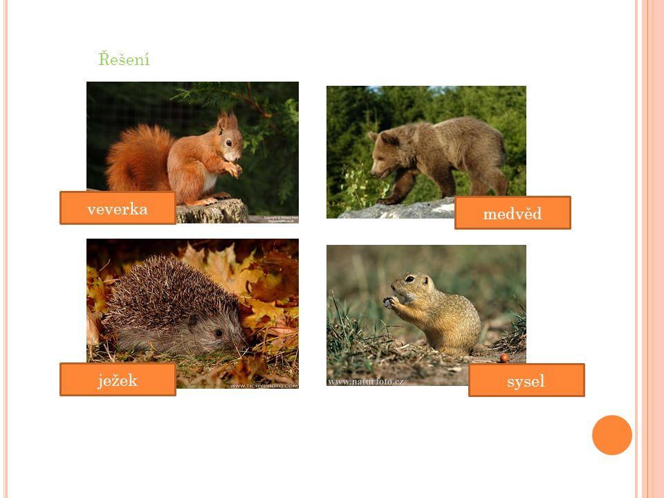 sysel medvěd ježek veverka Řešení