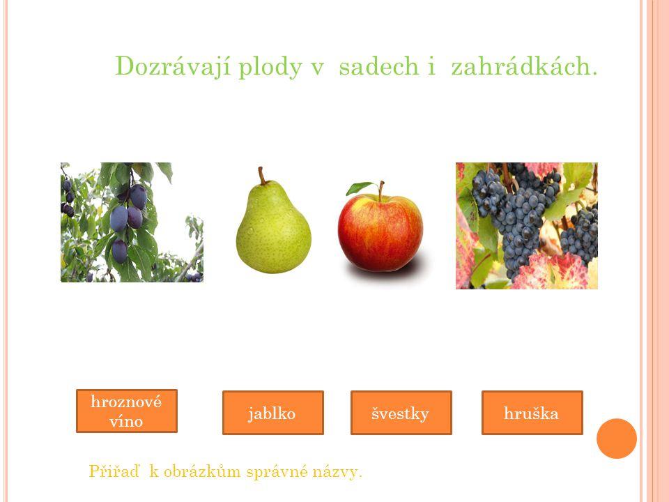 Dozrávají plody v sadech i zahrádkách. jablko hroznové víno hruška Přiřaď k obrázkům správné názvy. švestky