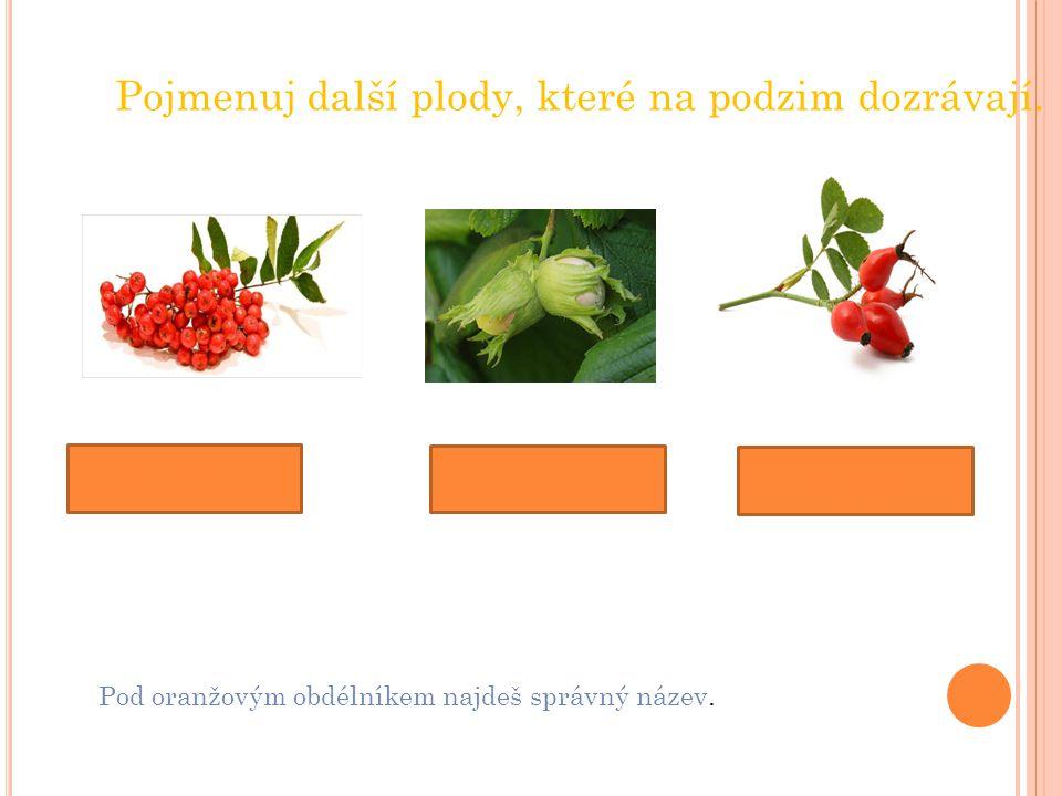 Pojmenuj další plody, které na podzim dozrávají. jeřabiny šípky lískové oříšky Pod oranžovým obdélníkem najdeš správný název.