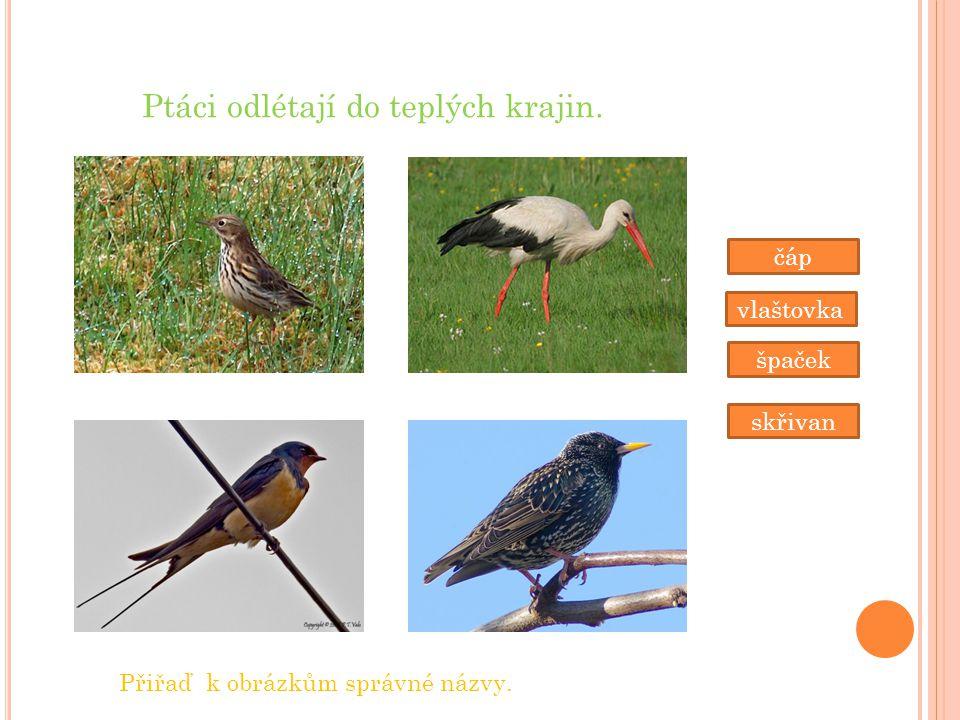 Ptáci odlétají do teplých krajin. čáp vlaštovka špaček skřivan Přiřaď k obrázkům správné názvy.
