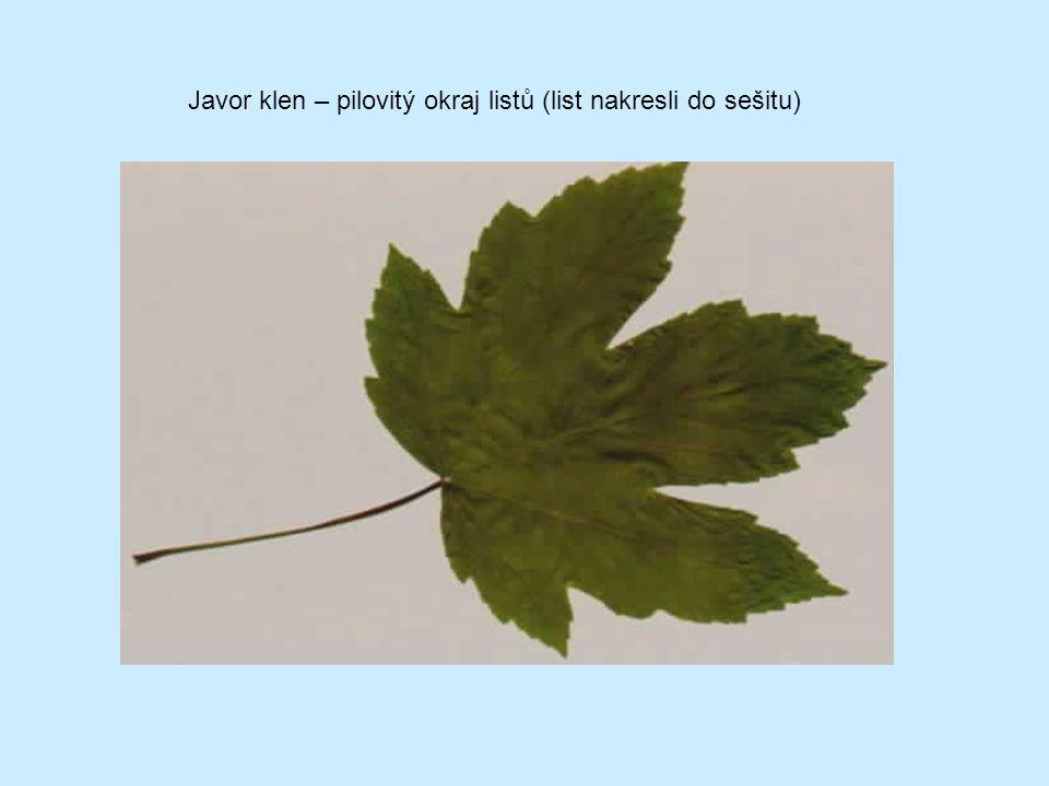 Botanicky malolistá Český národní strom Květ oboupohlavný Hmyzosnubná medonosná rostlina Plod je oříšek Léčivé účinky květů Měkké dobře opracovatelné dřevo Lípa srdčitá (lipovité) (správné zbarvení pro dvouděložné r.)