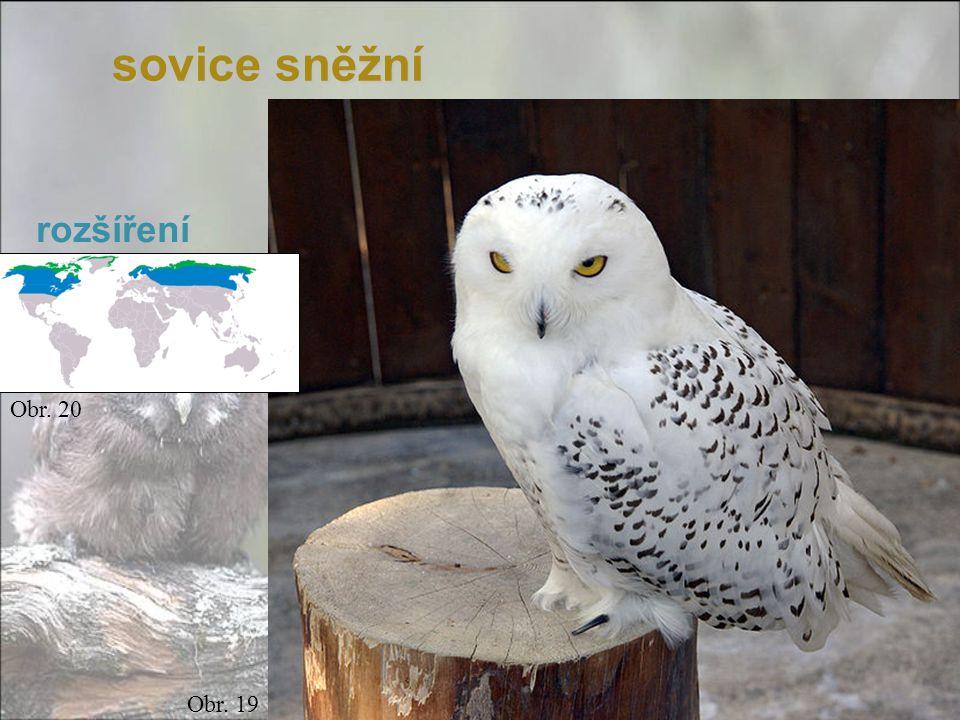 sovice sněžní Obr. 19 Obr. 20 rozšíření