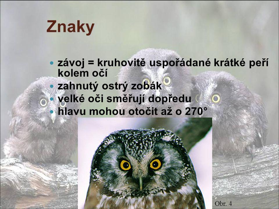 Sovy znaky - oči směřují dopředu, mají závoj - silné drápy a zahnutý zobák  noční dravci - jemné obrysové peří  tichý let - opeřené nohy s vratiprstem - hlavu otáčí o 270° - hnízda ve stromech, krmiví zástupci: puštík obecný kalous ušatý výr velký (největší) sýček obecný sova pálená sovice sněžná kulíšek nejmenší