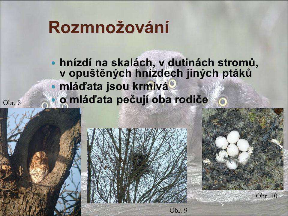 Rozmnožování hnízdí na skalách, v dutinách stromů, v opuštěných hnízdech jiných ptáků mláďata jsou krmivá o mláďata pečují oba rodiče Obr. 8 Obr. 9 Ob