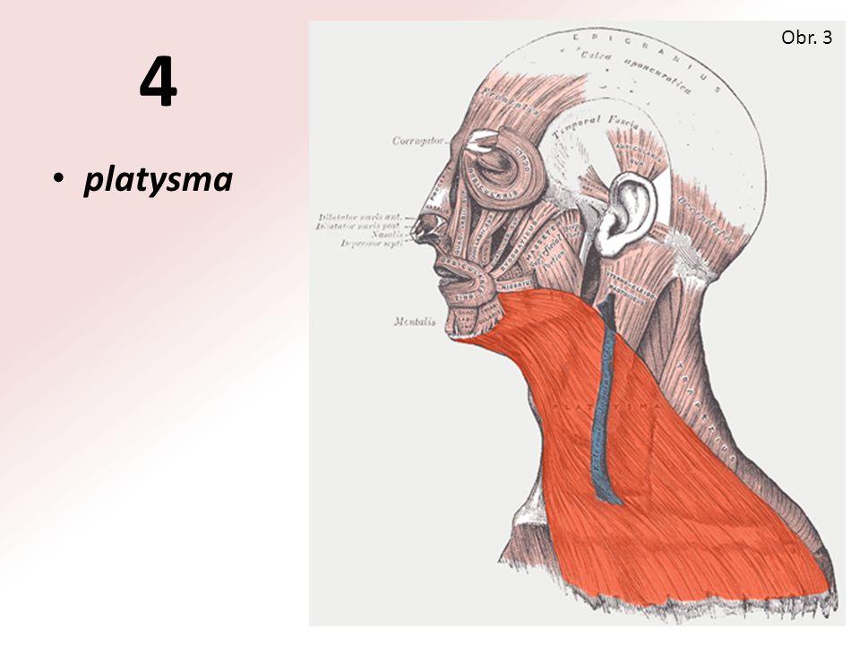 platysma Obr. 3 4