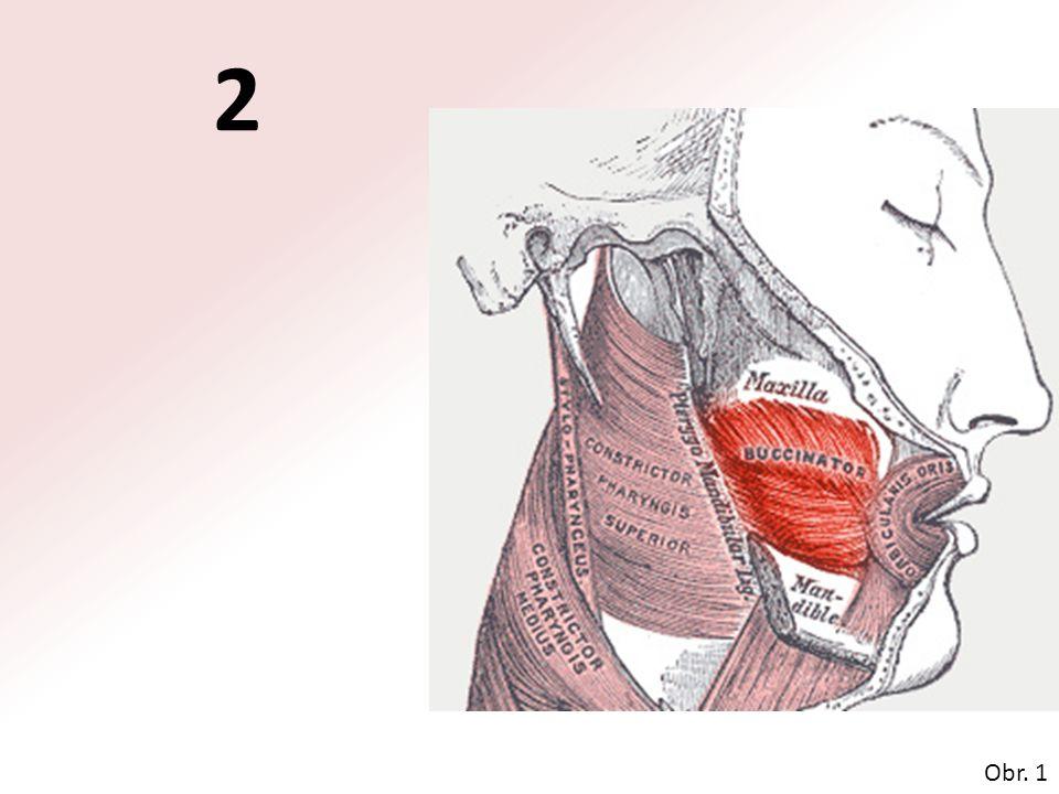 velký prsní sval (musculus pectoralis major) Obr. 4 8