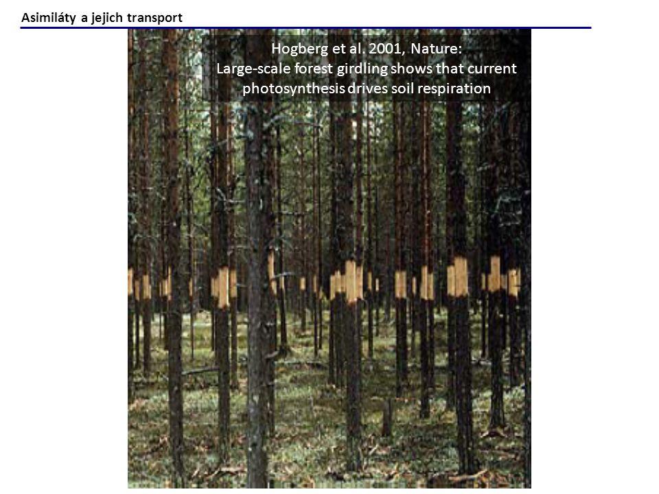 New Phytologist Volume 165, Issue 2, pages 351-372, 18 NOV 2004 DOI: 10.1111/j.1469-8137.2004.01224.x http://onlinelibrary.wiley.com/doi/10.1111/j.1469-8137.2004.01224.x/full#f4 Volume 165, Issue 2, http://onlinelibrary.wiley.com/doi/10.1111/j.1469-8137.2004.01224.x/full#f4 Uhlíková jímka v CO 2 -bohatším světě