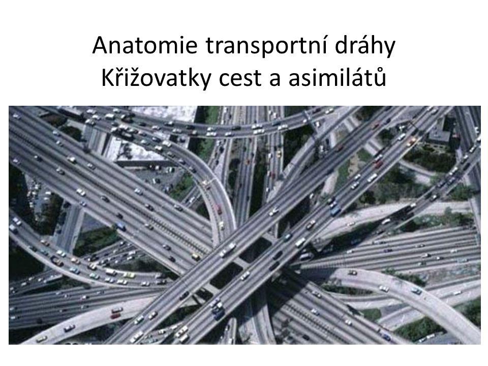 Asimiláty a jejich transport: Sítkovice
