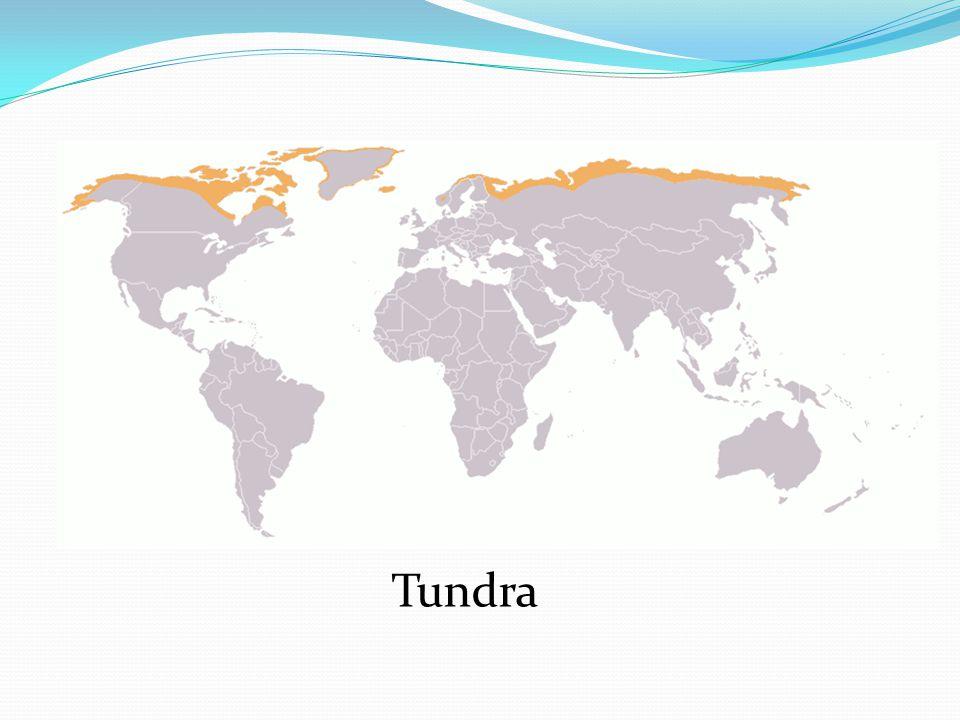 TUNDRA Typ krajiny, který se vyskytuje v místech, kde mírný pás přechází v severní polární pás.