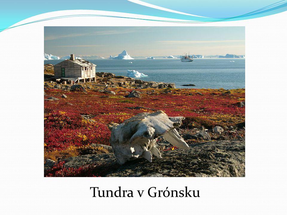 Tundra v Grónsku