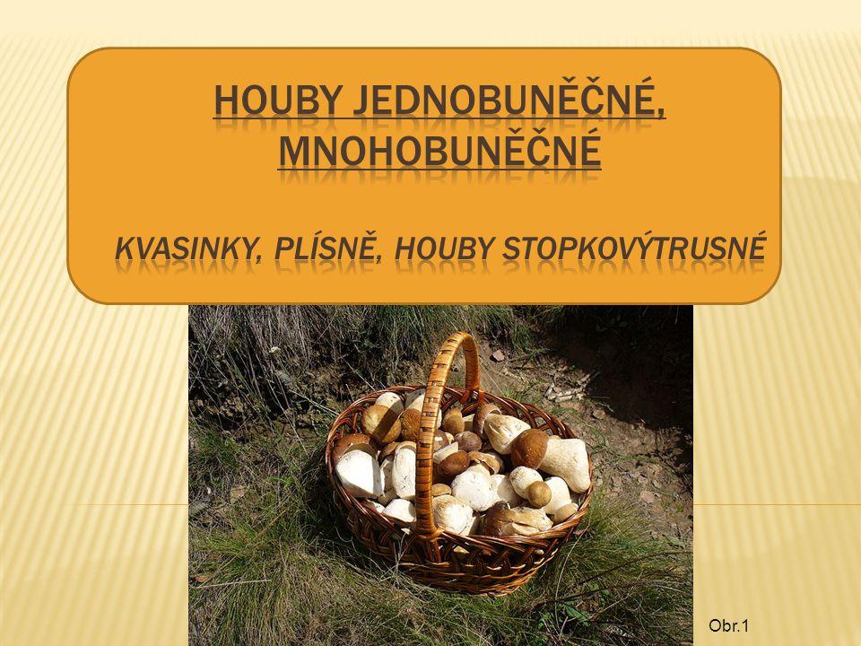 HOUBY Kvasinky jednobuněčné houby Kvasinka pivní Kvasinka vinná Plísně Plíseň hlavičková štětičkovec Houby stopkovýstrusné Žampión ovčí Hřib satan