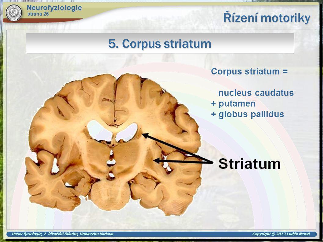 Ústav fyziologie, 2. lékařská fakulta, Univerzita Karlova Copyright © 2013 Luděk Nerad Řízení motoriky Neurofyziologie strana 26 5. Corpus striatum Co