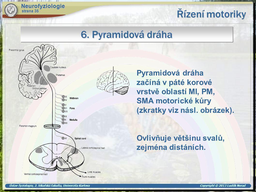 Ústav fyziologie, 2. lékařská fakulta, Univerzita Karlova Copyright © 2013 Luděk Nerad Řízení motoriky Neurofyziologie strana 35 6. Pyramidová dráha P