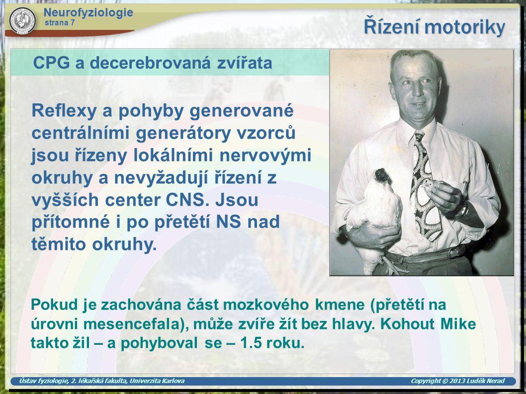 Ústav fyziologie, 2. lékařská fakulta, Univerzita Karlova Copyright © 2013 Luděk Nerad Řízení motoriky Neurofyziologie strana 7 Reflexy a pohyby gener