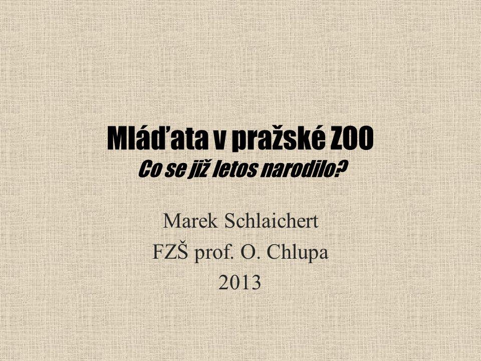 Mláďata v pražské ZOO Co se již letos narodilo? Marek Schlaichert FZŠ prof. O. Chlupa 2013