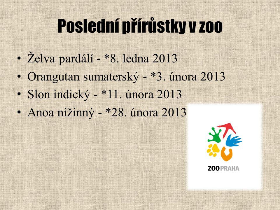 Poslední přírůstky v zoo Želva pardálí - *8. ledna 2013 Orangutan sumaterský - *3. února 2013 Slon indický - *11. února 2013 Anoa nížinný - *28. února