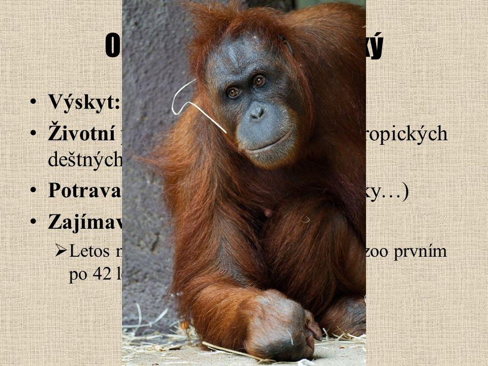 Orangutan sumaterský Výskyt: jihovýchodní Asie Životní prostředí: korunové patro tropických deštných lesů Potrava: části rostlin (plody, výhonky…) Zaj