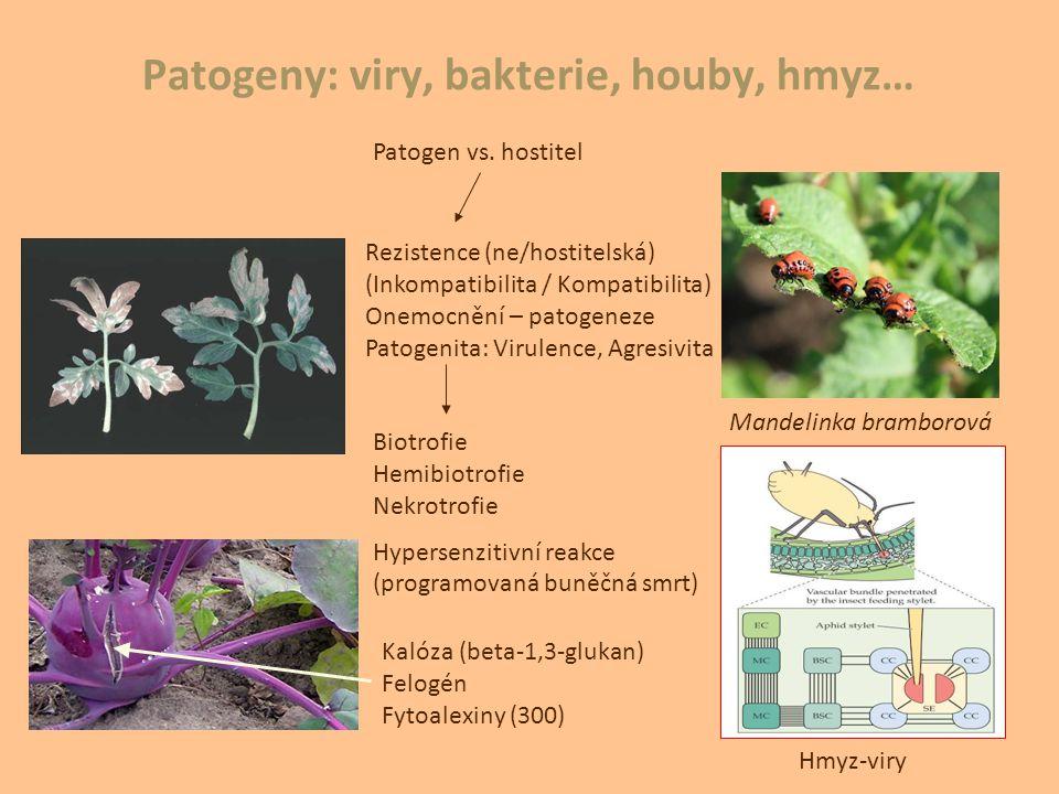 Patogeny: viry, bakterie, houby, hmyz… Patogen vs. hostitel Biotrofie Hemibiotrofie Nekrotrofie Hypersenzitivní reakce (programovaná buněčná smrt) Rez