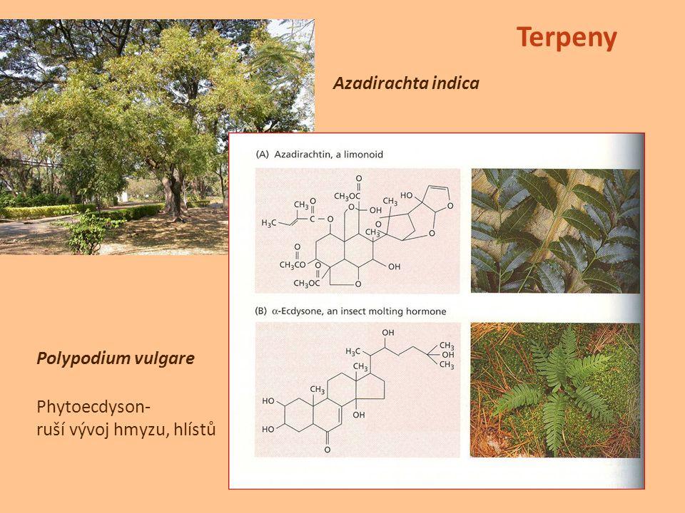 Azadirachta indica Terpeny Polypodium vulgare Phytoecdyson- ruší vývoj hmyzu, hlístů