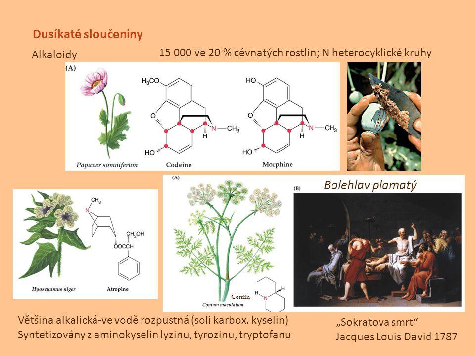 Dusíkaté sloučeniny Alkaloidy 15 000 ve 20 % cévnatých rostlin; N heterocyklické kruhy Většina alkalická-ve vodě rozpustná (soli karbox. kyselin) Synt
