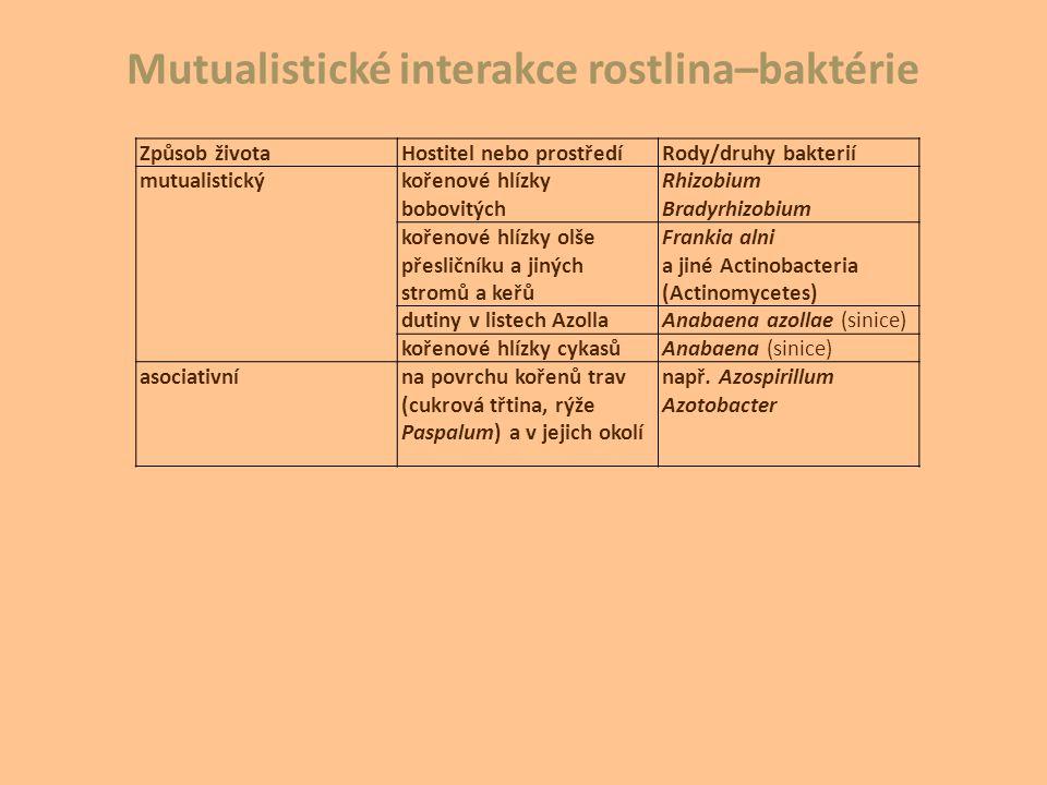 Způsob životaHostitel nebo prostředíRody/druhy bakterií mutualistickýkořenové hlízky bobovitých Rhizobium Bradyrhizobium kořenové hlízky olše přesličn