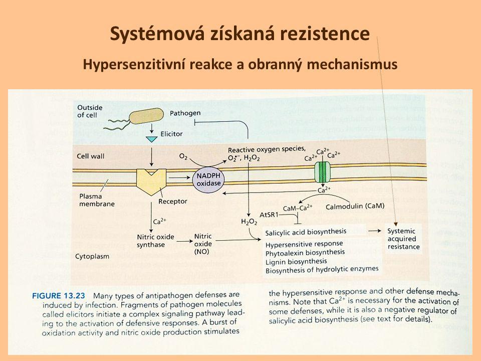 Hypersenzitivní reakce a obranný mechanismus Systémová získaná rezistence