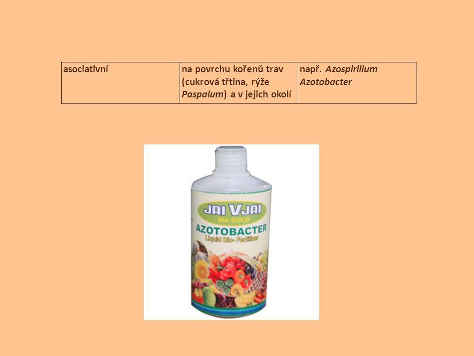 asociativnína povrchu kořenů trav (cukrová třtina, rýže Paspalum) a v jejich okolí např. Azospirillum Azotobacter