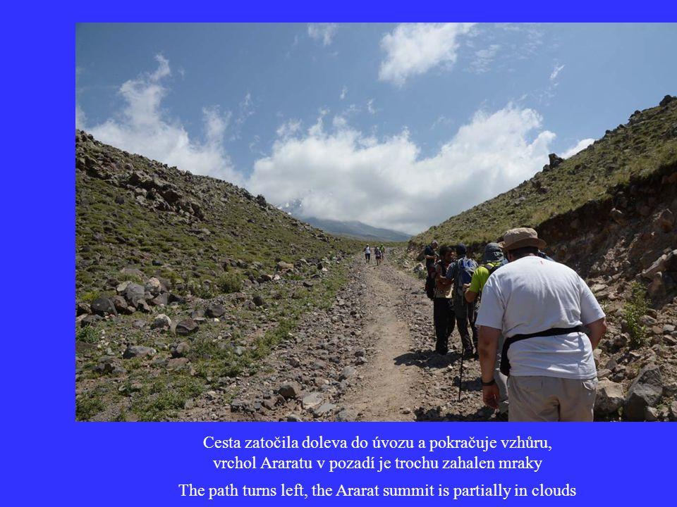 Občas jsme ale i ve výšce kolem 3500 m uviděli drobné kvítky Sometimes we saw subtle flowers even in the elevation of 3500 m