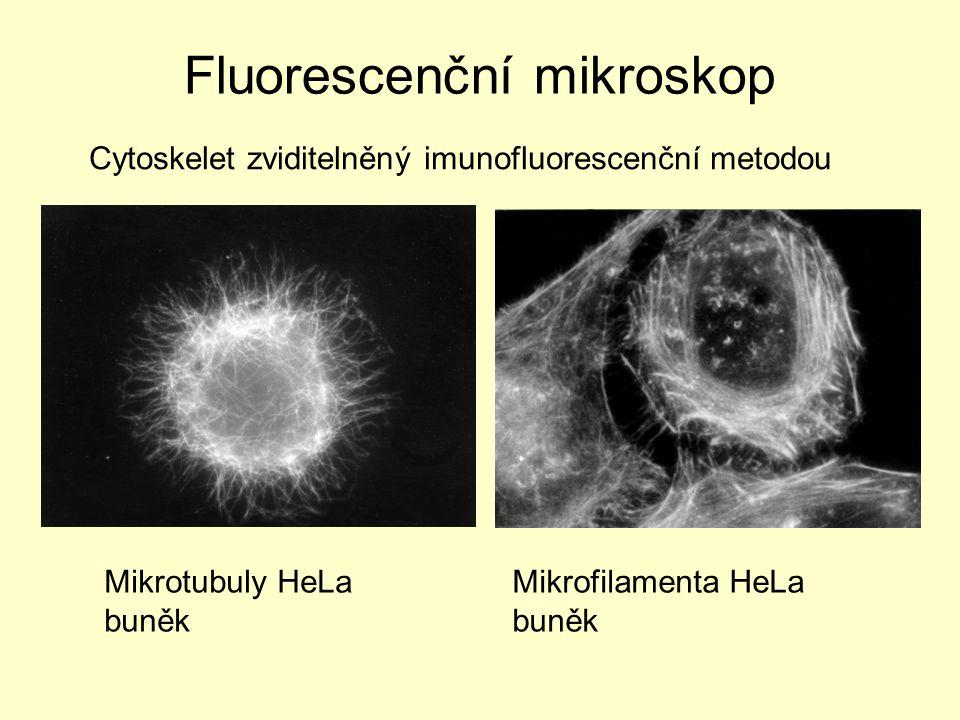 Cytoskelet zviditelněný imunofluorescenční metodou Mikrotubuly HeLa buněk Mikrofilamenta HeLa buněk Fluorescenční mikroskop