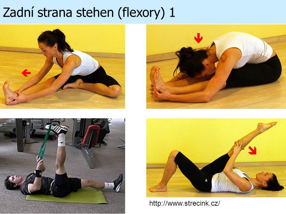 Zadní strana stehen (flexory) 1 http://www.strecink.cz/