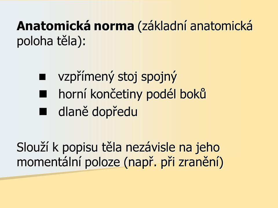 Anatomická norma (základní anatomická poloha těla): vzpřímený stoj spojný vzpřímený stoj spojný horní končetiny podél boků horní končetiny podél boků