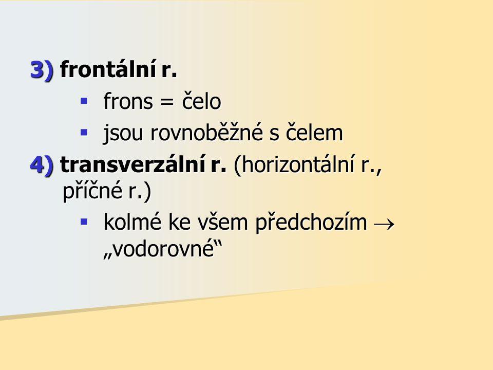 """3) frontální r.  frons = čelo  jsou rovnoběžné s čelem 4) transverzální r. (horizontální r., příčné r.)  kolmé ke všem předchozím  """"vodorovné"""""""